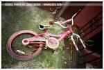 Pink Bike, Green Moss