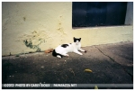 Cat, Old San Juan, June12