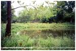 Pond, Deer Meadow, Ohio,Aug2012