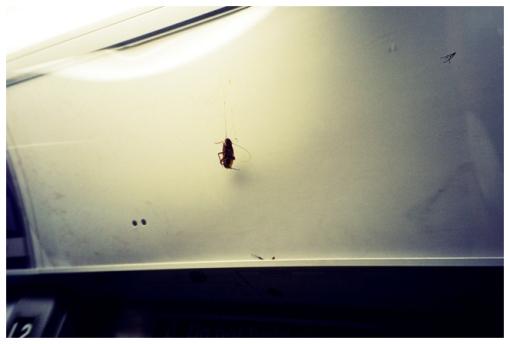 Roaches on Display, MTA Aug12