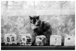 Cat, Reflection, Lace, Stones, clinton Hill,Apr13