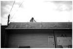 Reindeer on a hunters roof, MA,Aug12