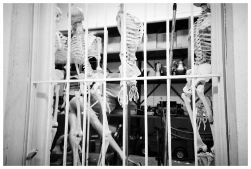 Skeletons, Pratt, Apr13
