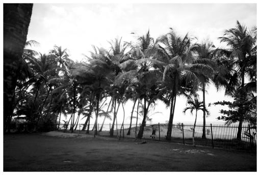 Palm Trees, Diaganol Line, Isla Verda, May13