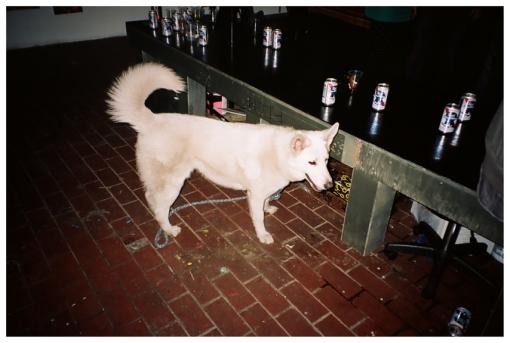 Spirit Animal, 420 @ Greenpoint Gallery