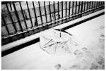 Umbrealla, Snow Blanket, Blizzard, Clinton Hill,Feb13