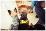 Dogs Life, Ohio,Jun13