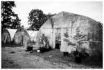 Marvin's Farms, Greenhouses 2,Jun13