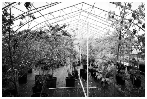 Marvin's Farms, Greenhouses 3, Jun13