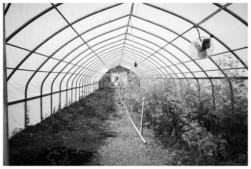 Marvin's Farms, Greenhouses 4, Jun13