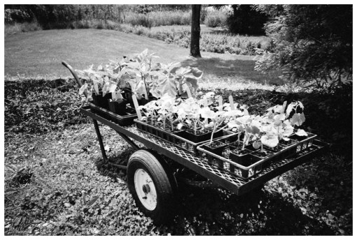 Marvin's Farms, Wagon of Greens, Jun13