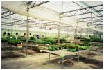 Marvin's Organic Garden, Ohio,Jun13
