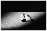 Baby Bird Dead, Street,Aug13