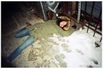 Carly, Dead, Blood, Clinton Hill,Dec13
