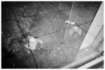 Dead Bird 2, Window, OTR, Cincinnati,Jun13