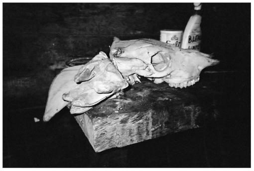 Fugary Boat Club, Skull2, HudsonNY July12