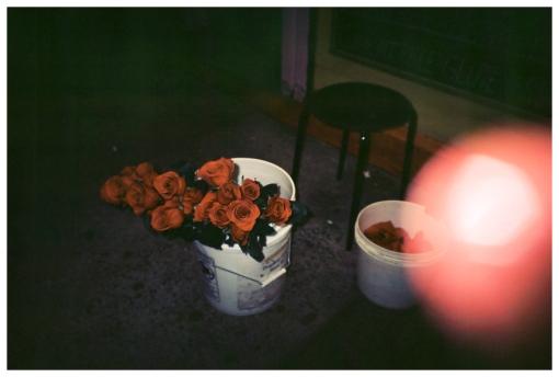 Roses on Vday_Feb12