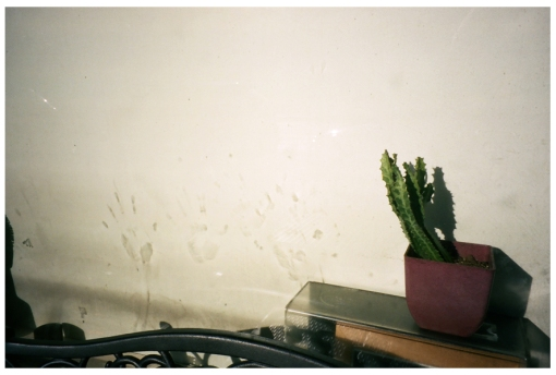 cactus, handprints, sun, Clinton Hill, Nov13