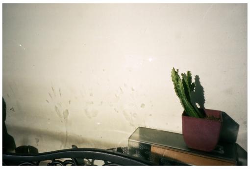 cactus, handprints, sun, Clinton Hill, Nov13