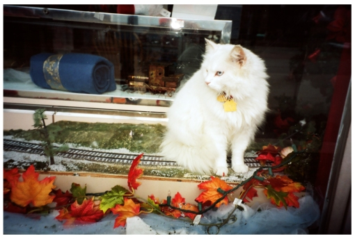 Cat. Train Set, Downtown Ohio, Dec13