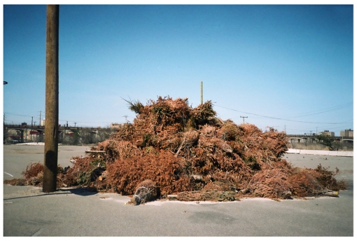 Dead Xmas Trees, Far Rockaway, Expired Film, Apr14