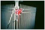 red Bow, White Fence BushwickMay14