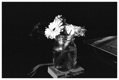 Dramatic Flowers, Mar15