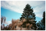 Minature house, Giant plants, Kingston,Oct15
